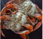 Garlic Crabs (Per LB)