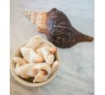 Conch (Per LB)