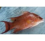 Florida Hog Fish (Per LB)